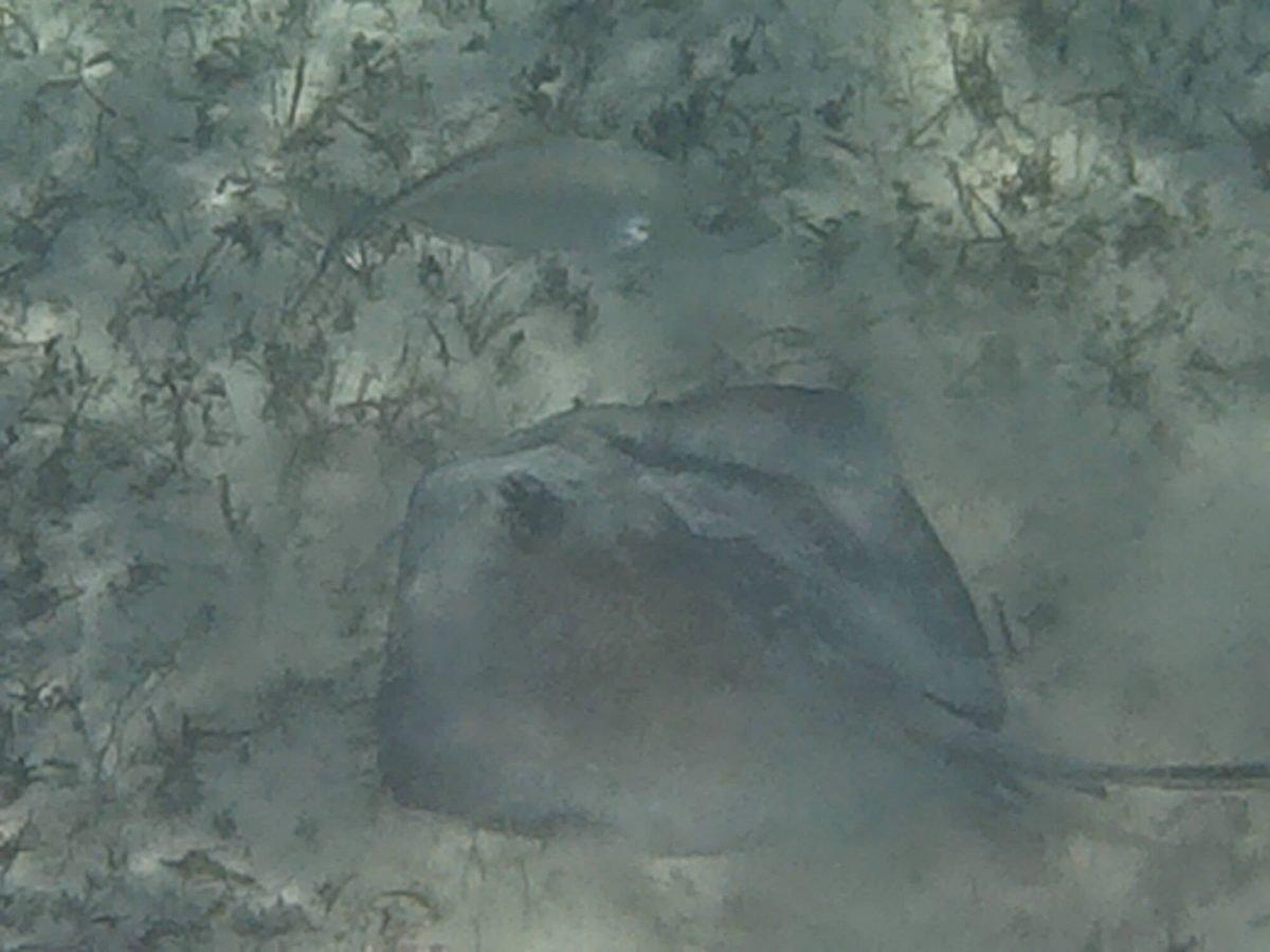 snorkeling with turtles in Akumal