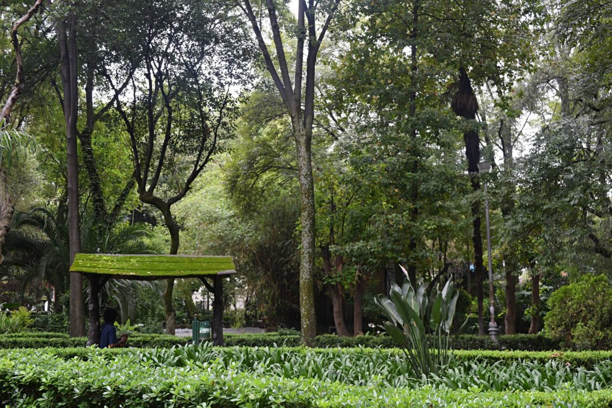 what to do in condesa
