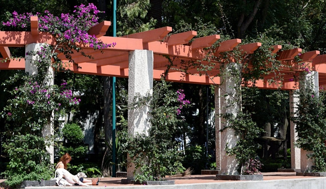 what-to-do-in-condesa-mexico-city